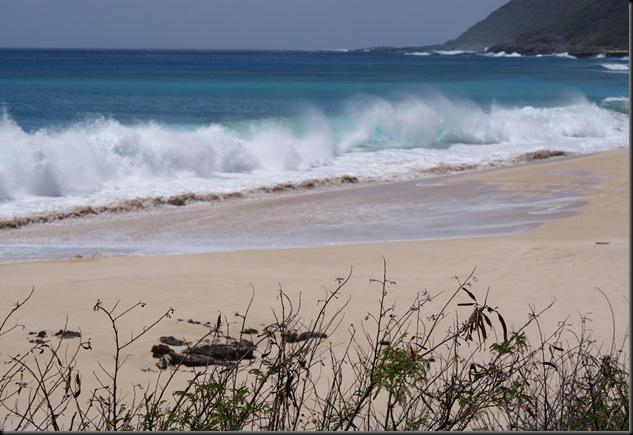 Kaena Beach 062