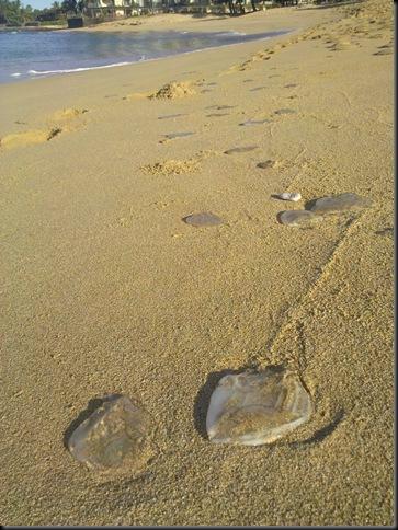walk on the beach Droid 008