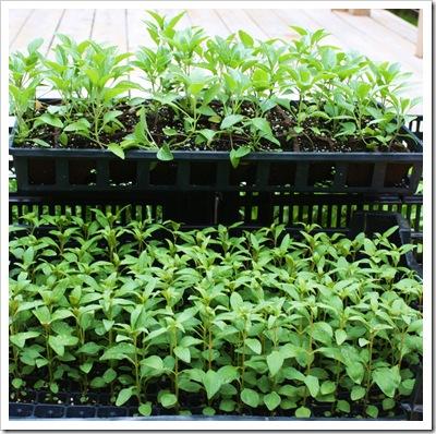 free seedlings river garden catskill, ny