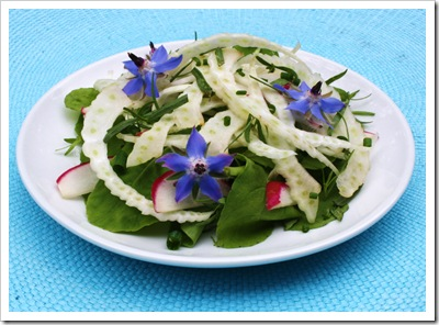 fennel arugula herb salad with borage, tarragon, chives, basil, radish
