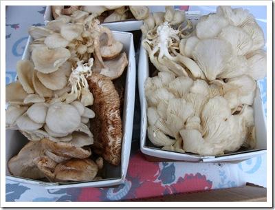oyster mush treegap