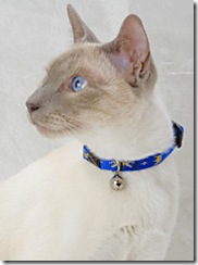 lupine cat