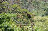 Sur les bords du cañon (il y a un singe dans l'arbre)