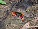 Nos copains les crabes