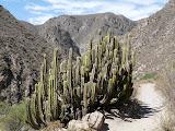 Vers le canyon, on se croirait revenus au Mexique