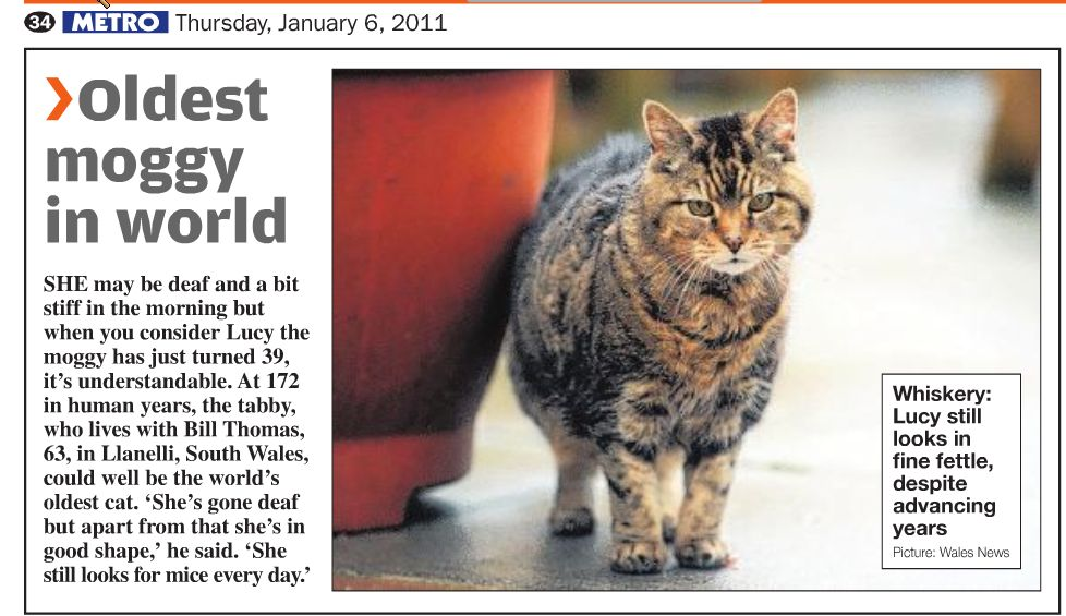 World S Oldest Cat Creme Puff