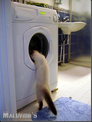 Cat_investigates_washing_machine_2003-07-03