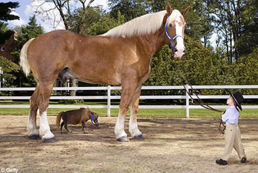 a406_horse