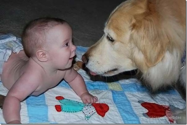 1 - niños con perros misimagenesdivertidas  (33)