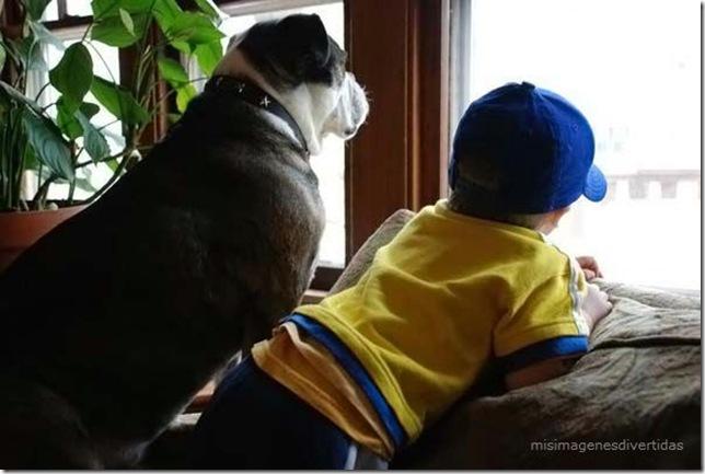 1 - niños con perros misimagenesdivertidas  (28)