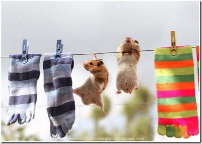 animalesdivertidos roedores (10)