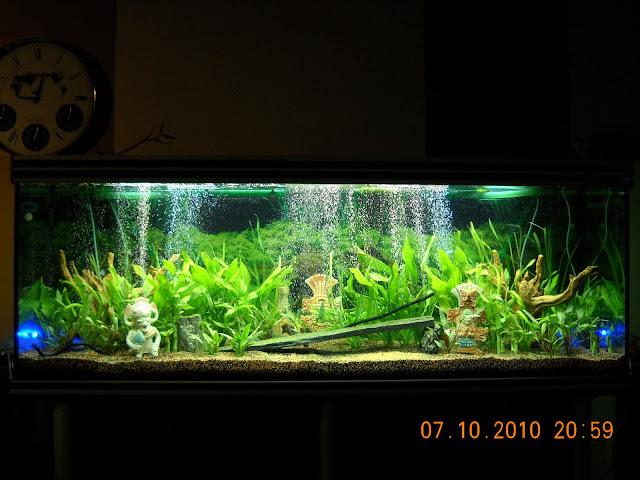 Mon 830 litres en foto for Terreau aquarium