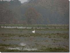 Week 2010-48 - Overstroming november 2010 012