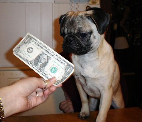 moneyFz_fs