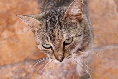 Uma gatinha vadia em St. Kitts. Aguardo as vossas piadas sobre procurar vadias para fotografar em portos estrangeiros.