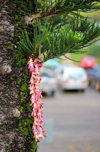 2011-03-05-Kauai-008web