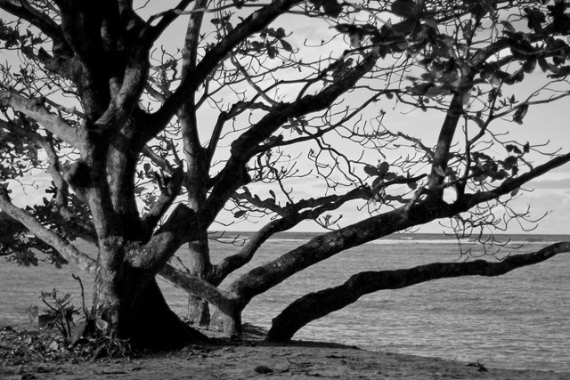 2011-02-28-Kauai-003web