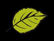 Leaf_s