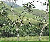 Aves Serrinha 3 de março 2011 008