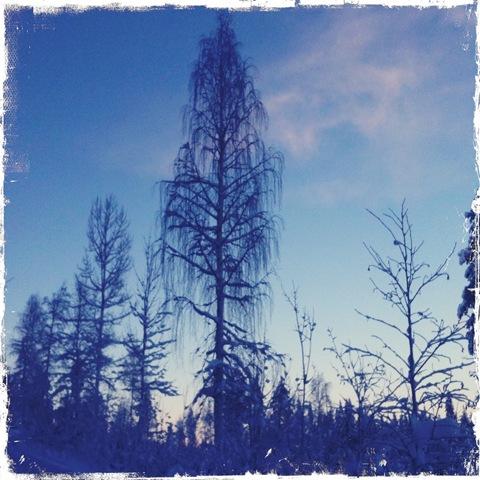 träd2