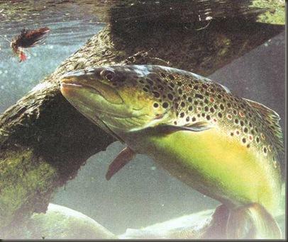 pescado 3