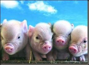 Países PIGS