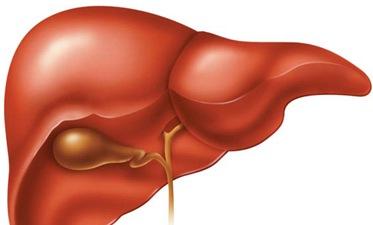 Liver-largest-gland