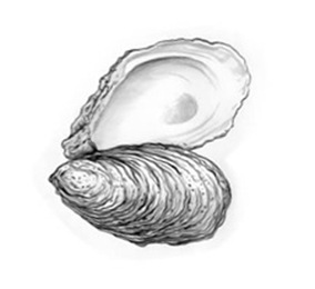 oyster-culture