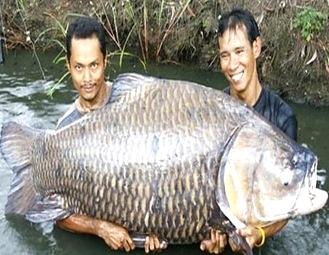 lacustrine-fish