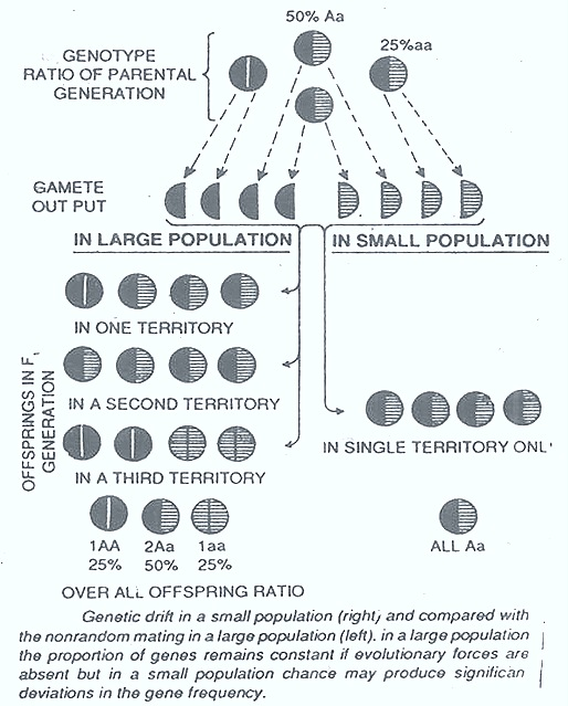 genetic-drift