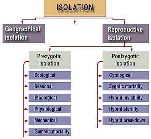 isolation-geographical-evolution