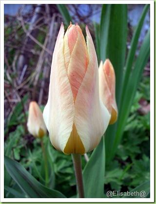 Blomster og drivhus mai 09 001