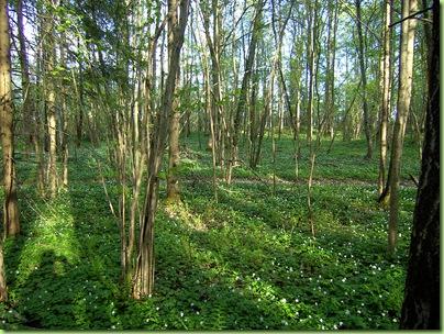 Blomster og drivhus mai 09 052