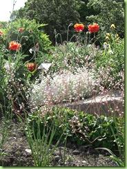 Botanisk have 7 juni 09 004