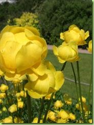 Botanisk have 7 juni 09 006