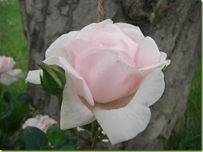 Blomster i haven juli 09 035