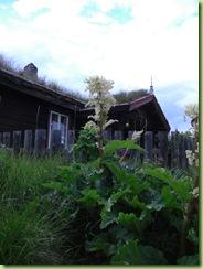 Skåbuferie 21 -28 juni 2009 005