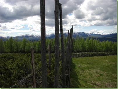 Tur til Murdalsetra i Skåbuferien juni 09 022
