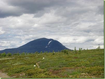 Tur til Murdalsetra i Skåbuferien juni 09 032