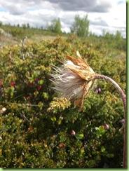 Tur til Murdalsetra i Skåbuferien juni 09 035