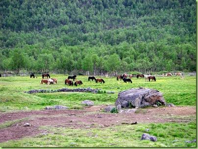 Tur til Veslevasseter og Sikkelsdalseter 035