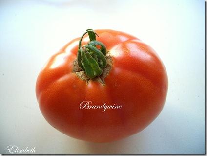 Tomater og edderkopp 002