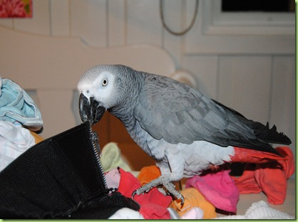 Otto fikser klesvasken 006