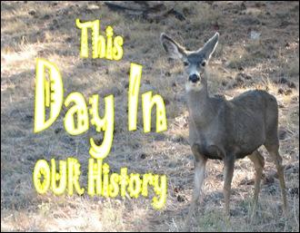 DIH - Deer