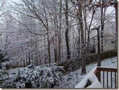 snow, star BOM, dogs 030