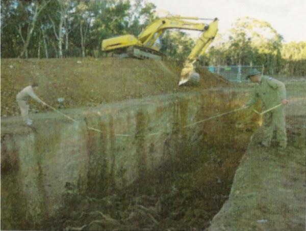 kangaroo corpses