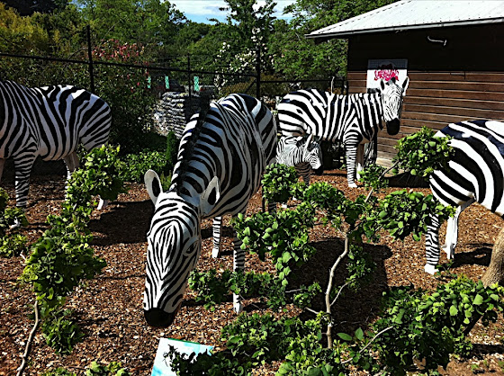 lake george zebras