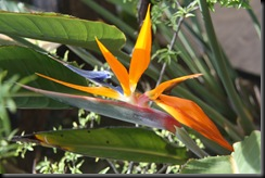 Flora BM 001