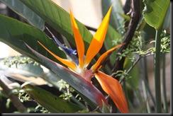 Flora BM 002