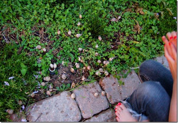 snails6